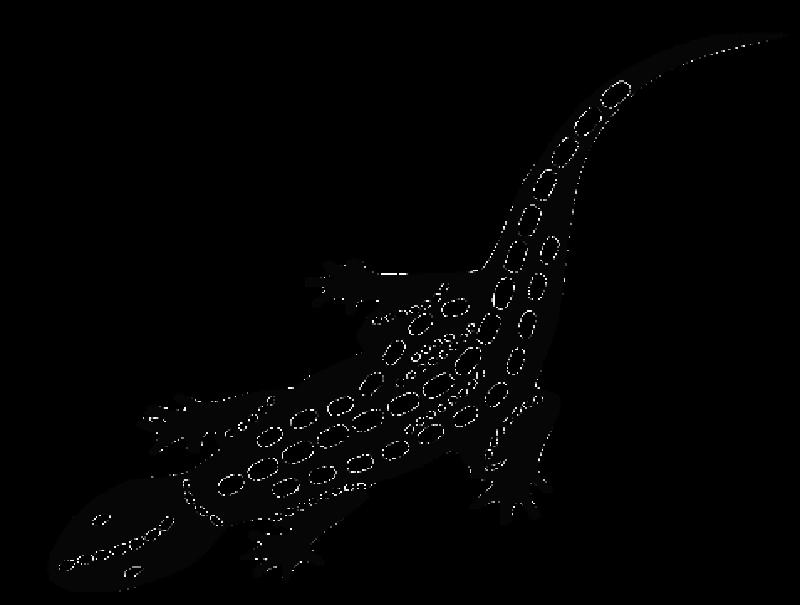 Gecko_Fotor