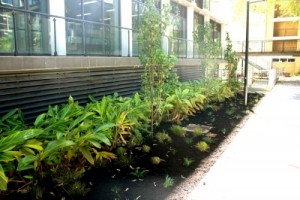 Landscaping Services - Horticulturalist Advice Commercial Garden Landscaping
