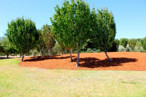 Commercial Mulching
